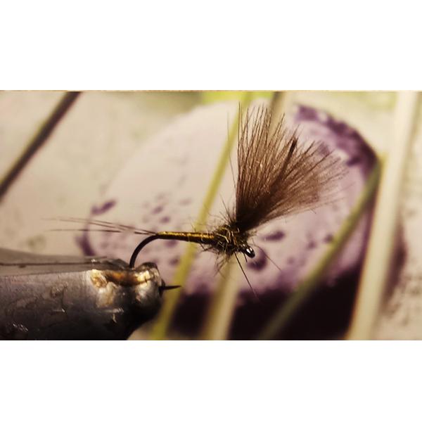 mouche sèche émergente d'olive foncé